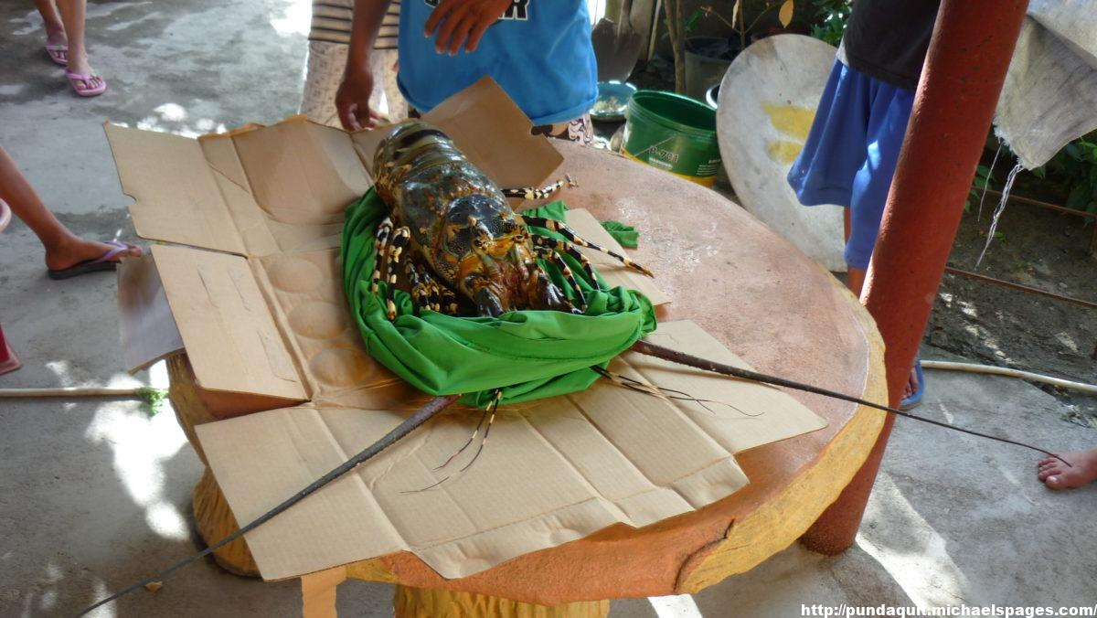 a lobster on a table to show